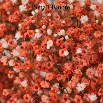 Coral Orange Airbrushed Baby's Breath