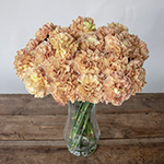 Padi Coral Peach Carnation Flowers in a Vase
