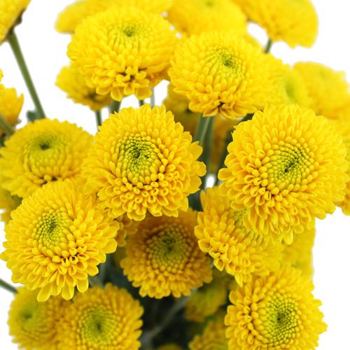 Goal Mini Button Pom Yellow Flower