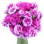 Passionate Purple Carnation Flowers In a vase