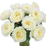 Patience Ivory David Austin Wholesale Roses In a vase