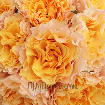 bulk campanella peach garden roses sold near me