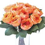 Fresh cut peach garden roses with peony ruffled petals for weddings