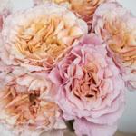 Peach Ruffles Peony Rose Bunch