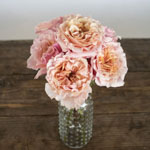 Peach Ruffles Peony Wholesale Roses In a vase