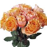 Peach Sherbet Garden Wholesale Roses In a vase