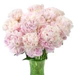 Pecher Blush Pink Peony in a vase