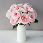 Perfect Pink Garden Wholesale Roses In a vase