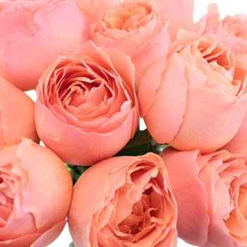 Coral Quartz Bulk Garden Rose