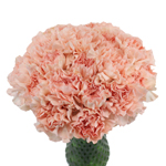 Pink Candy Carnation Flowers In a vase
