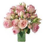 Pink Carmeline Garden Wholesale Roses In a vase
