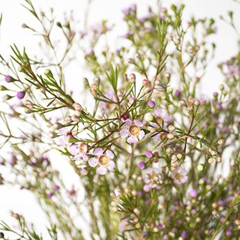 Lavender wax DIY wedding flowers
