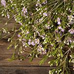 Lavender wax bulk wedding flowers