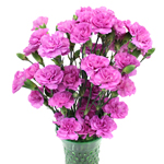 Pink Lilac Carnation Flowers In a vase