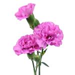 Pink Lilac Mini Carnation Stem