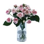 The fresh pink mini sweetheart garden roses are sold in bulk for wedding flowers