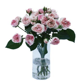 The fresh pink mini sweetheart garden roses are sold in bulk for wedding flowers
