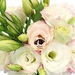 Pink Picote Lisianthus Wholesale Flower Upclose