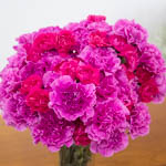 Pink Swirl Carnation Flowers In a vase