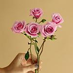 Pinky Lavender Spray Rose Stems