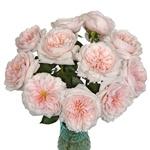 Pleasing Pink Garden Wholesale Roses In a vase