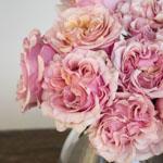 Powder Pink Garden Rose Bunch