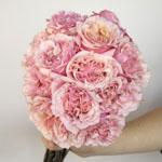 Powder Pink Garden Wholesale Rose Bunch in a hand