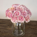 Powder Pink Garden Wholesale Roses In a vase
