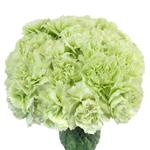 Prado Mint Green Carnation Flowers In a vase