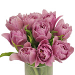 Price Pinky Purple Double Tulip Wholesale Flower In a vase