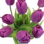 Prince Purple Tulips Wholesale Flower Side Stem