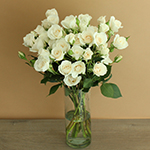 Princess Ivory Cream Wholesale Roses In a vase
