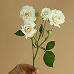 Princess Ivory Cream Rose Stem
