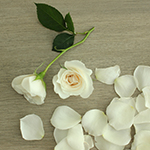 Princess Ivory Cream Spray Rose Bunch