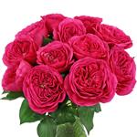 Princess Pink Garden Wholesale Roses In a vase