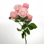 Prismatic Light Pink Spray Rose Stem
