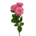 Prismatic Pink Spray Rose Stem