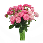 Prismatic Pink Spray Wholesale Roses In a vase