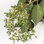 Wedding greenery bulk green privett berries sold near me