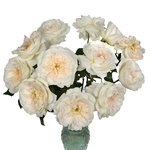 Purity Ausoblige Garden Wholesale Roses In a vase