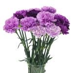 Purple Carnation Flowers In a vase