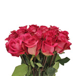 Purple Cezanne Hot Pink Wholesale Roses In a vase