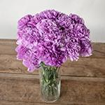 Purple Deep Lavender Carnation Flowers In a vase