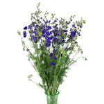 Purple Larkspur Fresh Cut Flower