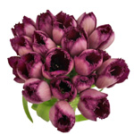 Purple Lavender Feather Tulip Wholesale Flowers Bunch in Hand