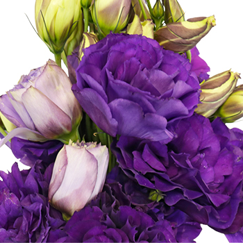 Hues of Purple Designer Lisianthus Flower