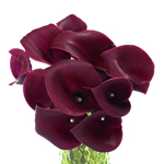 Burgundy Mini Calla Lily