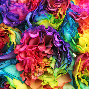 bulk rainbow tinted garden roses sold for pride events
