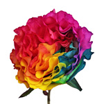 Rainbow Ruffles Garden Rose Stem