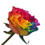 Rainbow Ruffles Garden Rose Side Stem View